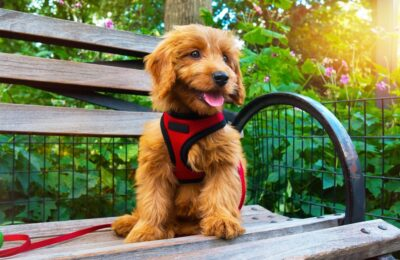 How To Choose The Right Dog Harness Canada