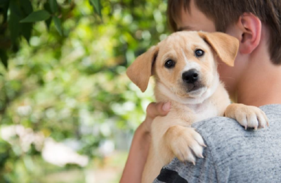 How to Choose a Dog Suitable for your Needs