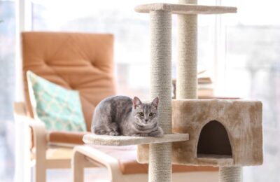 Common Mistakes That New Cat Owners Make