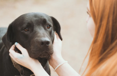 Why should you get yourself a pet dog?