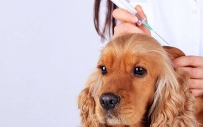 Everything You Should Know About Dog Vaccinations Armadale